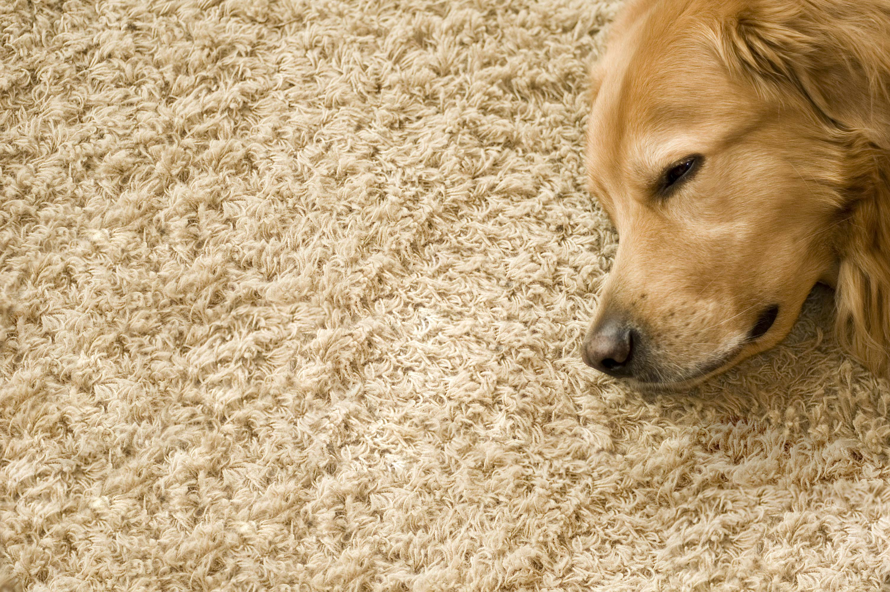 Shirley's Chem-Dry is your healthy home provider for professional carpet and upholstery cleaning in Tipton and Kokomo IN