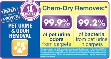 Shirley's Chem-Dry removes 99.9% of pet urine odors from carpets and 99.2% of bacteria from pet urine in carpets in Kokomo IN
